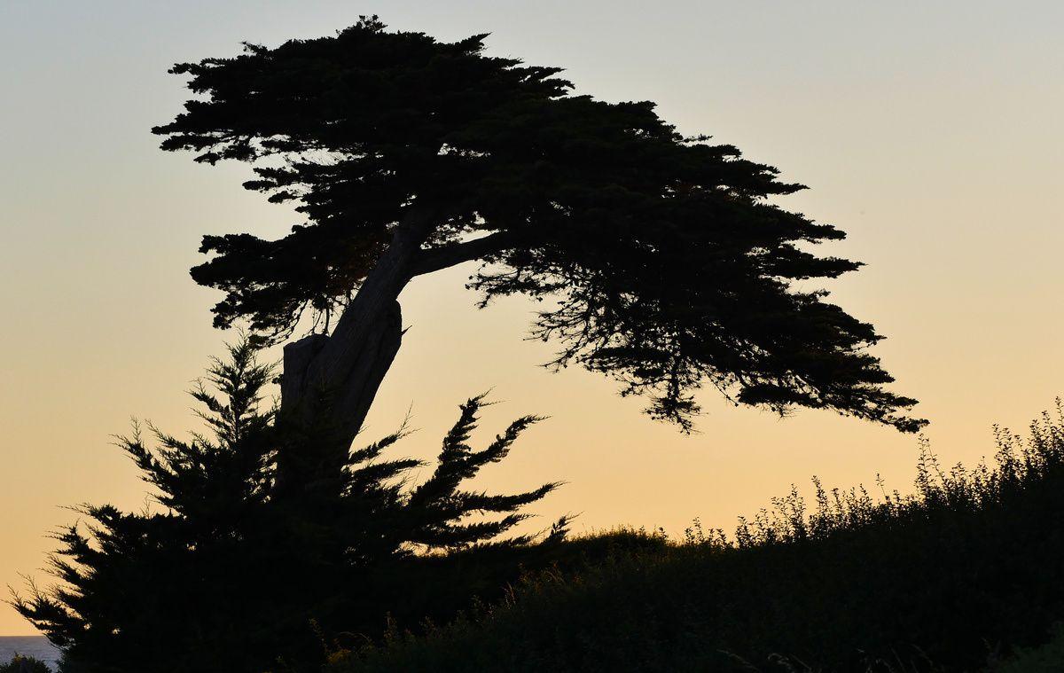 Variations nocturnes pour un arbre