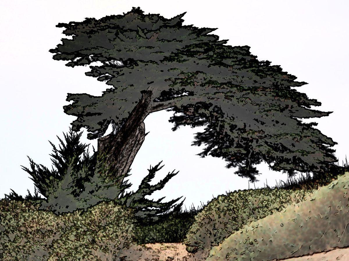 L'arbre de Portmain sous toutes les coutures...