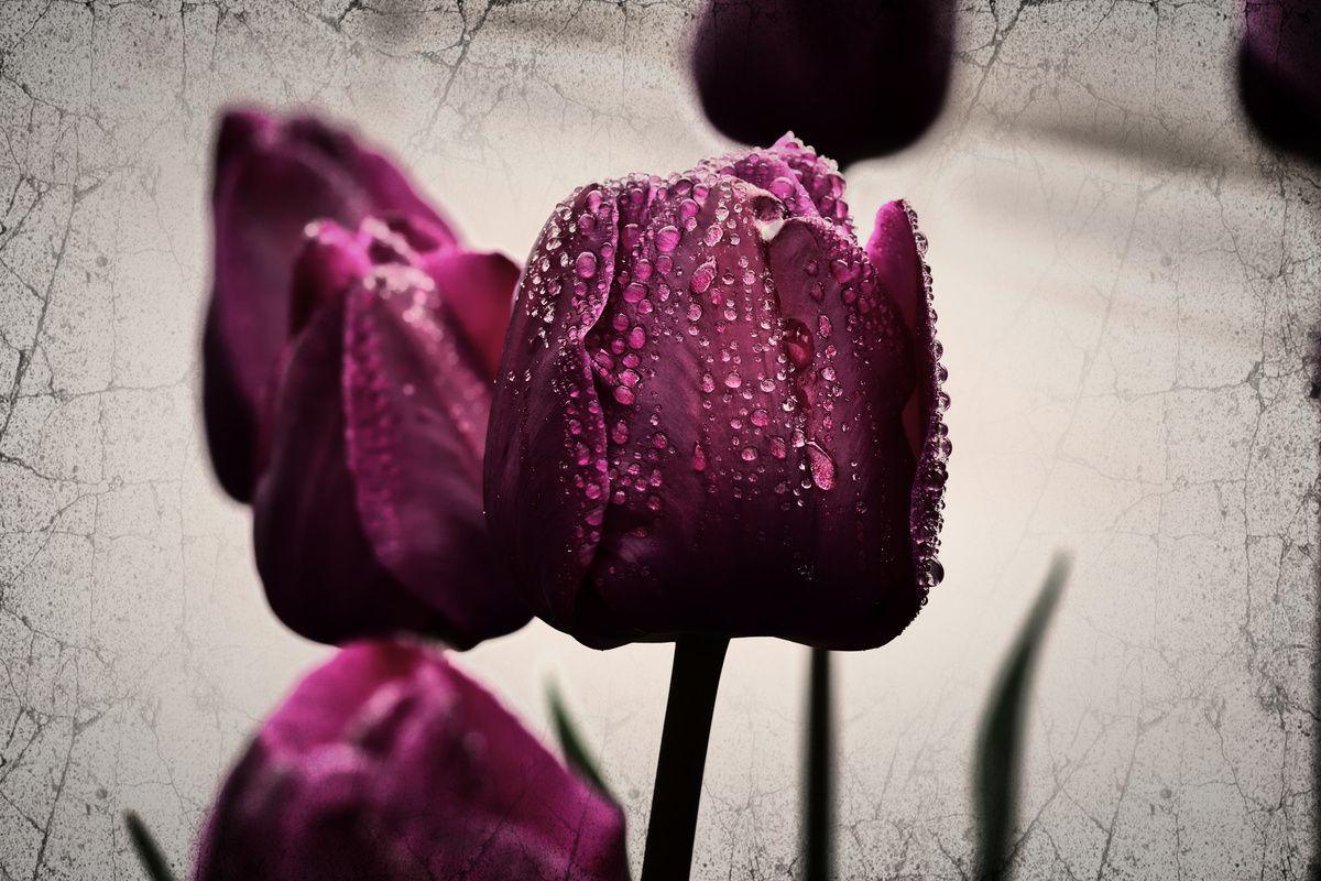 fleurs de tulipes en art numérique