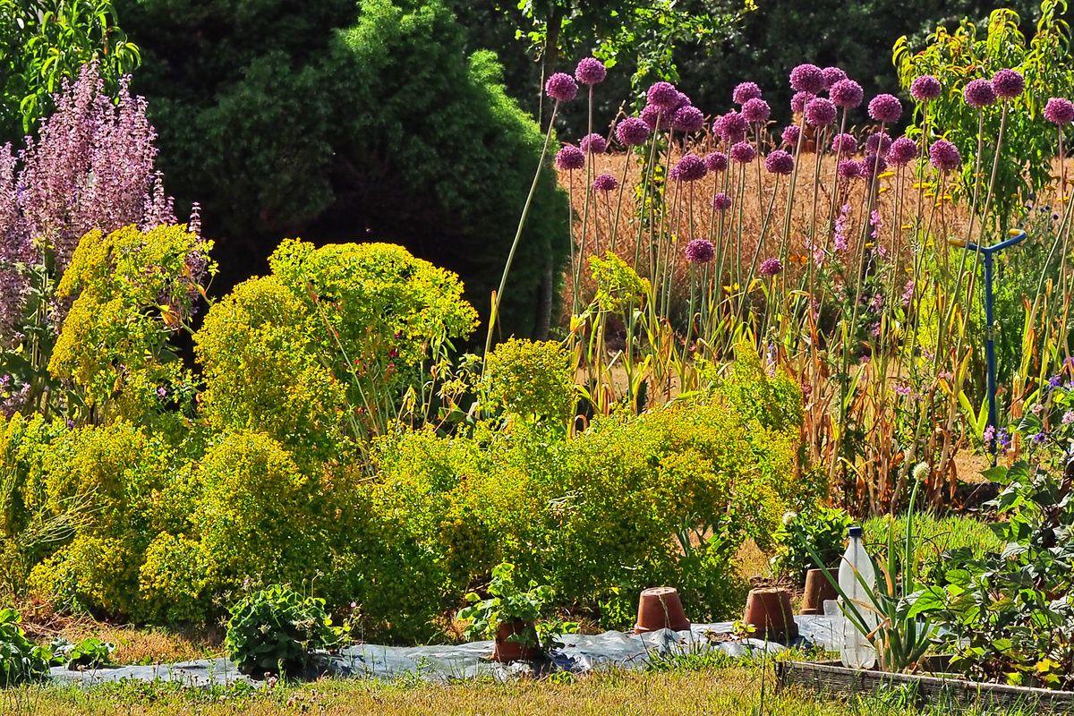 Le jardin de Marie-France Morice (04/04)