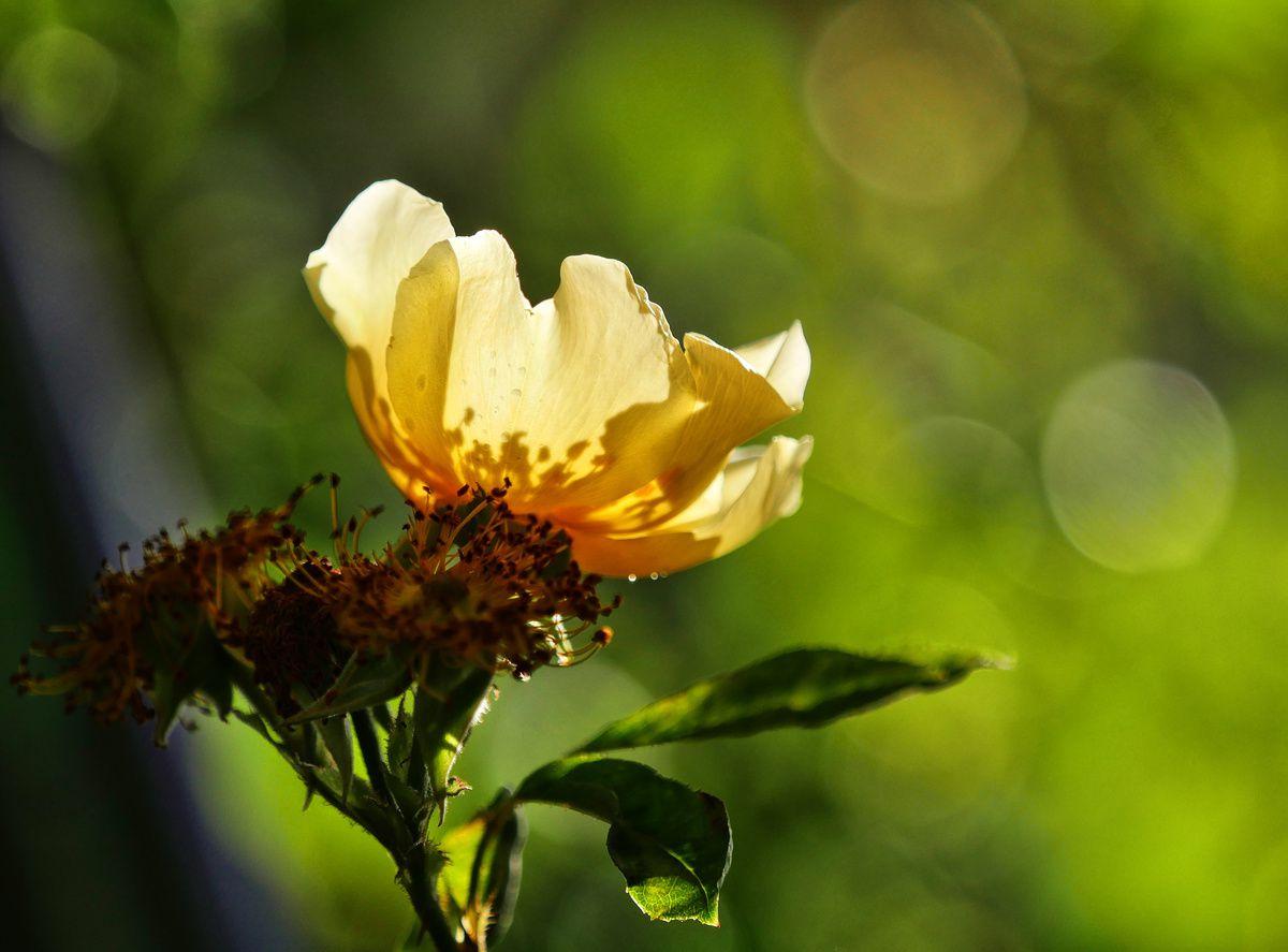 Le jardin de Marie-France (01/04)