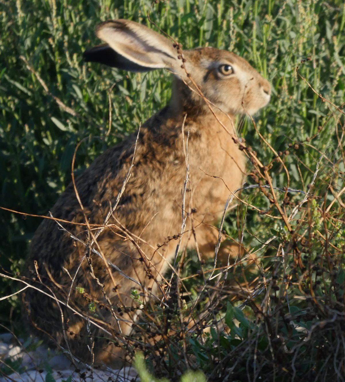 la vie à hauteur des yeux d'un lapin !