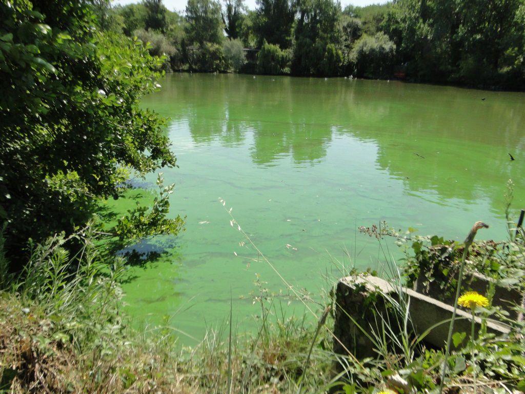 le vert du lac fin juillet 2016