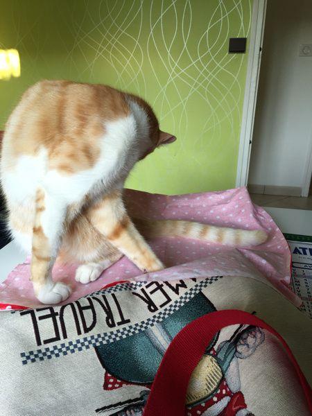 La couture c'est chat-crément intéressant !