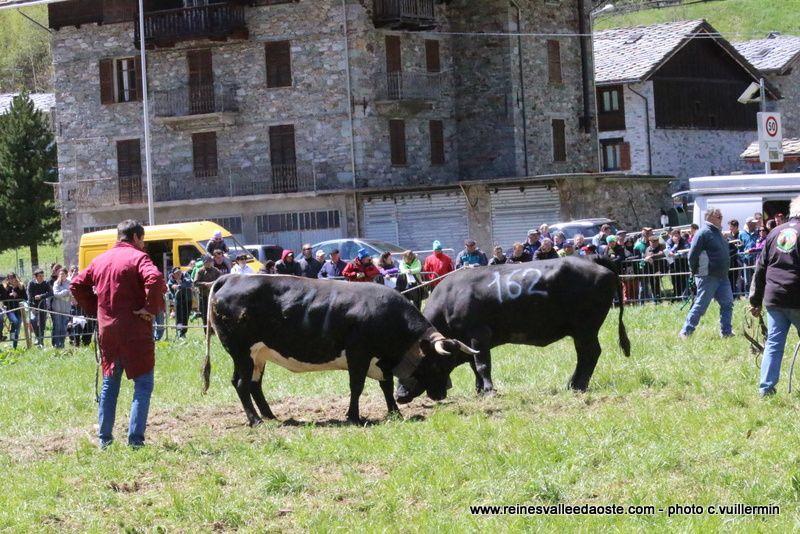 Une journée de combats à Issime 25 avril 2016 - 2ème partie