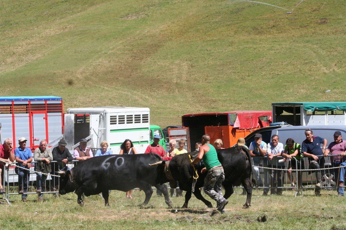 Ici Brunie de Cerisey chasse sans aucune difficulté la vache la plus lourde du concours, Magali de Elio Champion (760 kilos). Rappelons en passant que cette Magali a été septième à l'Espace 2013.