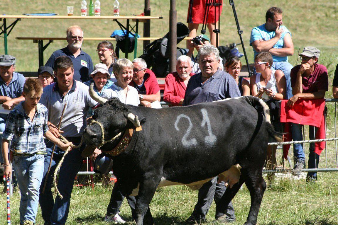 Frivole de la Soc. La Borettaz (560 kilos), déjà troisème de 3ème cat. en 2014 à Valpelline et l'année passée à Jovençan.