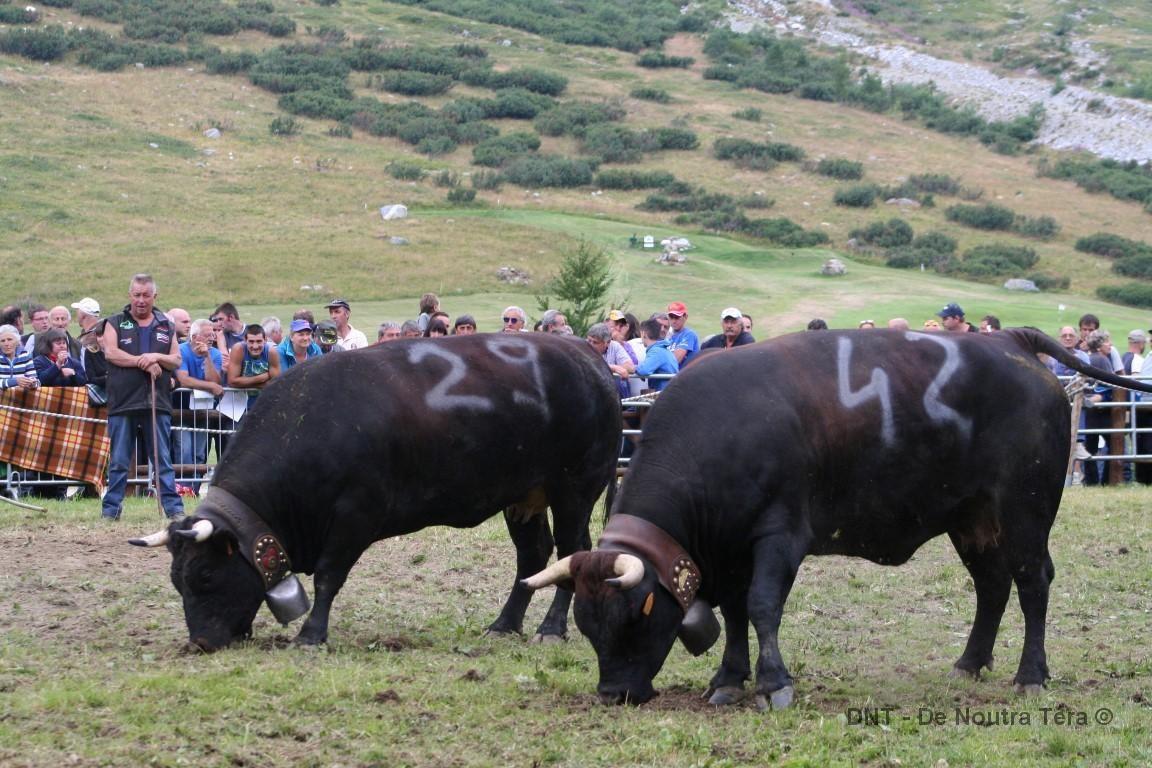 Une journée de combats à Breuil Cervinia - 14 août 2016