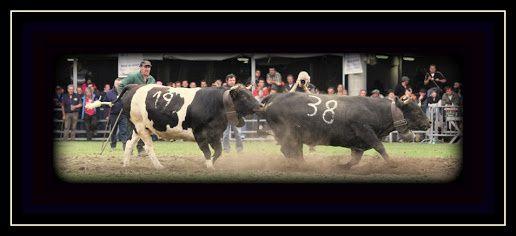 Finale Regionale 2012 Riban après avoir gagné à Brunette de Cerisey Elio de Gignod et à Trionfa de Bethaz Pierre de Gressan elle devra s'arrendre face à Villa de Livio Pervier d'Arpuilles.