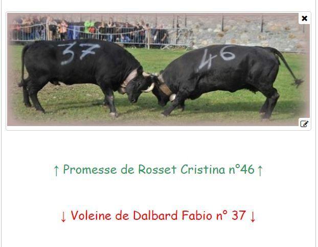 COLORADO le taureau aimé par les amis de Savoie e de la Chartreuse