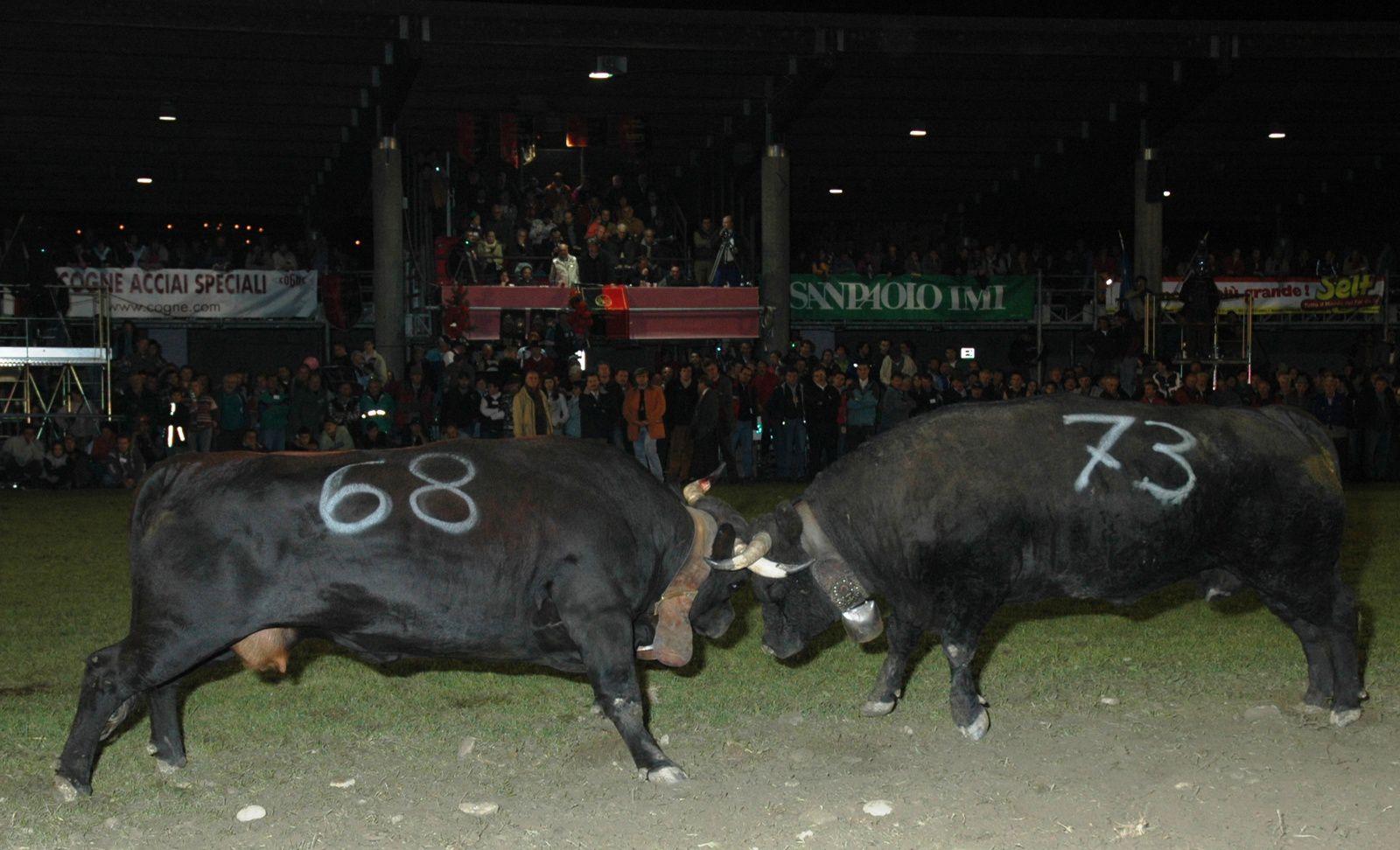 Arène de la Croix-Noire, Aoste le 22 Octobre 2006. Finale Régionale de deuxième catégorie: Difesa de Damarino Edy ( 68) avec Mourina des frères Viérin (73)