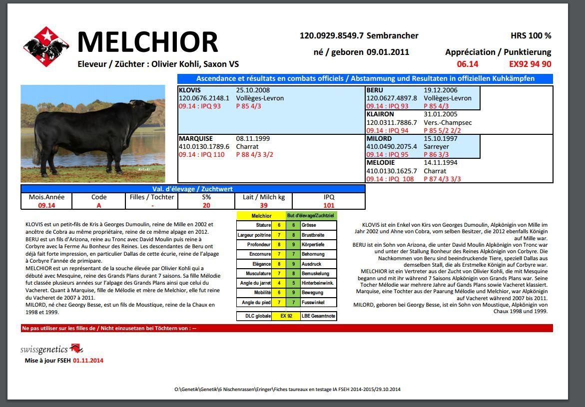 Taureau de cette semaine: MELCHIOR ( Taureau Hérens)  Rubrique hebdomadaire Taureaux employés pour l'insémination artificielle en Vallée d'Aoste.