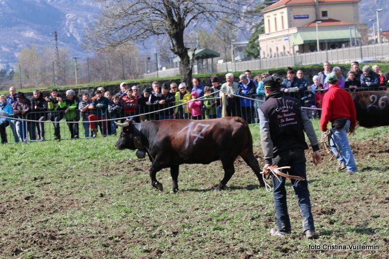 3/4: Reinon (510kg) Bollon Maurice