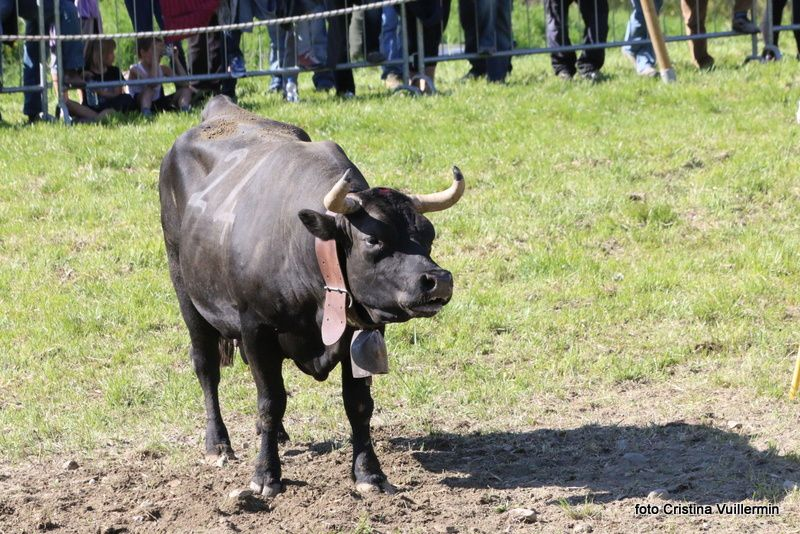 Reina: Tormenta (560kg) Quendoz Elio