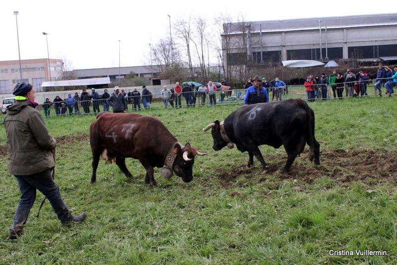 Piemonte Eliminatoria di Cafasse - Reportage - 2 parte