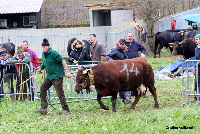 Piemonte Eliminatoria di Cafasse - Reportage - 1 parte