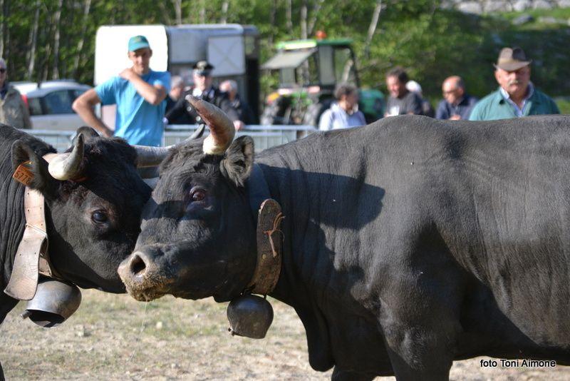 Piemonte - Groscavallo reportage di Toni Aimone