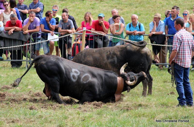 Batailles de Reines Col de Joux 30 juillet 2017. Reportage Christelle Porliod