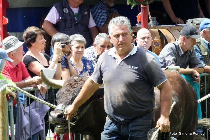 Batailles de Reines Col  du Joux 30 juillet 2017. Reportage Simona Porliod