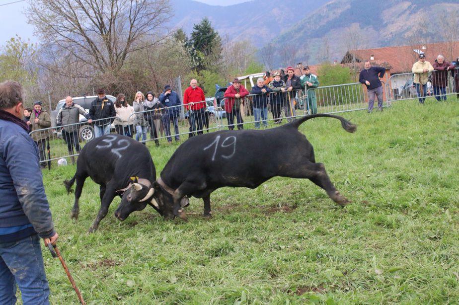 Reines delle Valli di Lanzo: eliminatoria di Cafasse - 2 aprile 2017