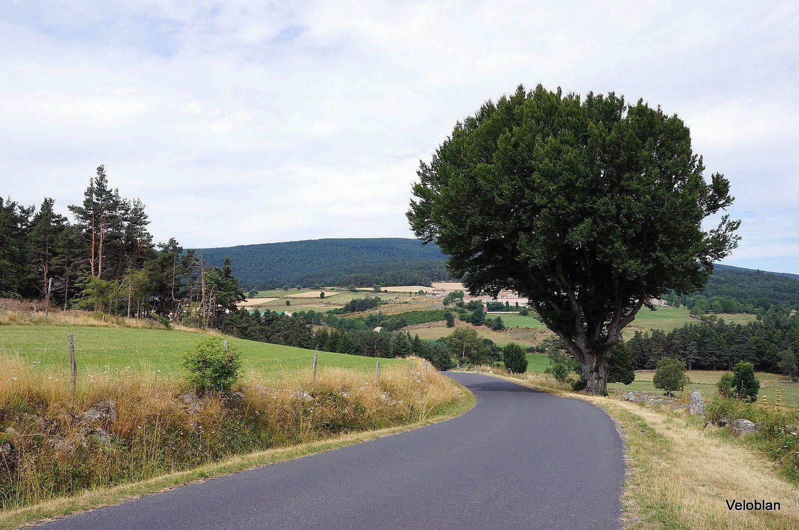 Balade dans le Cantal, Haute-Loire, Lozére
