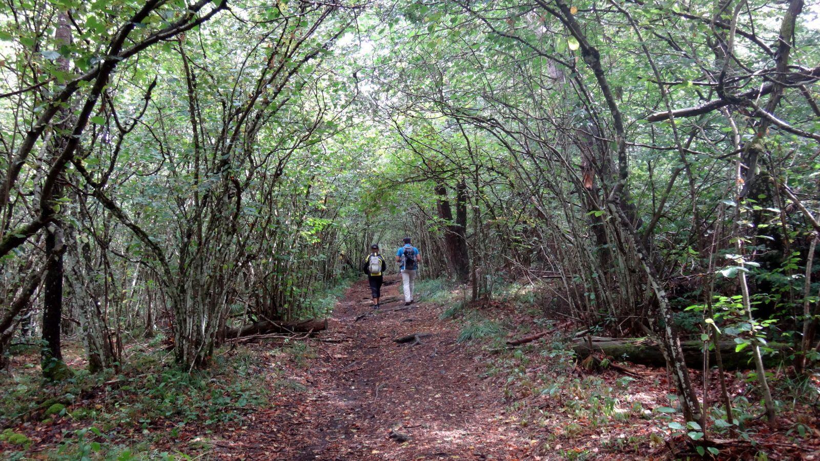 35 km à pied autour du Puy de Dôme