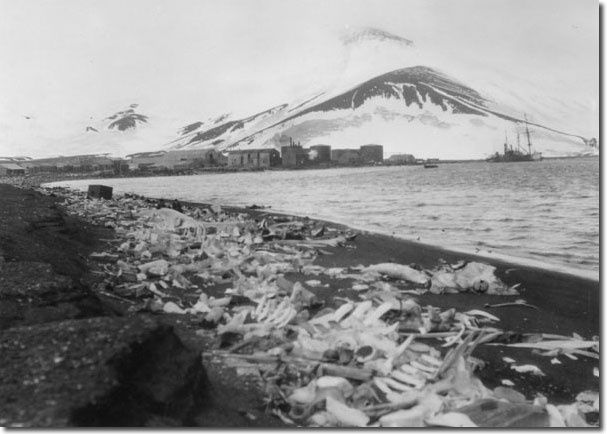 Deception island - the Whaling Station and, in the foreground , whalebones - photo http://www.deceptionisland.aq