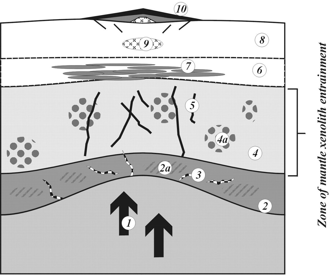 Schematic representation of the components of the crust and mantle beneath the Vogelsberg - after Boggard and Wörner - reference in sources. 1, Upwelling asthenosphere (EAR - European Asthenospheric Reservoir - signature)&#x3B; 2, lower lithospheric mantle (depleted)&#x3B; 2a, metasomatized regions of the TBL (anhydrous)&#x3B; 3, hydrous mineral bearing veins (∼70 Ma?)&#x3B; 4, upper lithospheric mantle (depleted)&#x3B; 4a, metasomatized regions of the MBL (Hercynian, hydrous)&#x3B; 5, veins related to Tertiary volcanism&#x3B; 6, lower crust&#x3B; 7, Tertiary intrusions (alkalic and/or tholeiitic)&#x3B; 8, middle and upper crust&#x3B; 9, magma chamber (alkaline differentiates)&#x3B; 10, Vogelsberg.