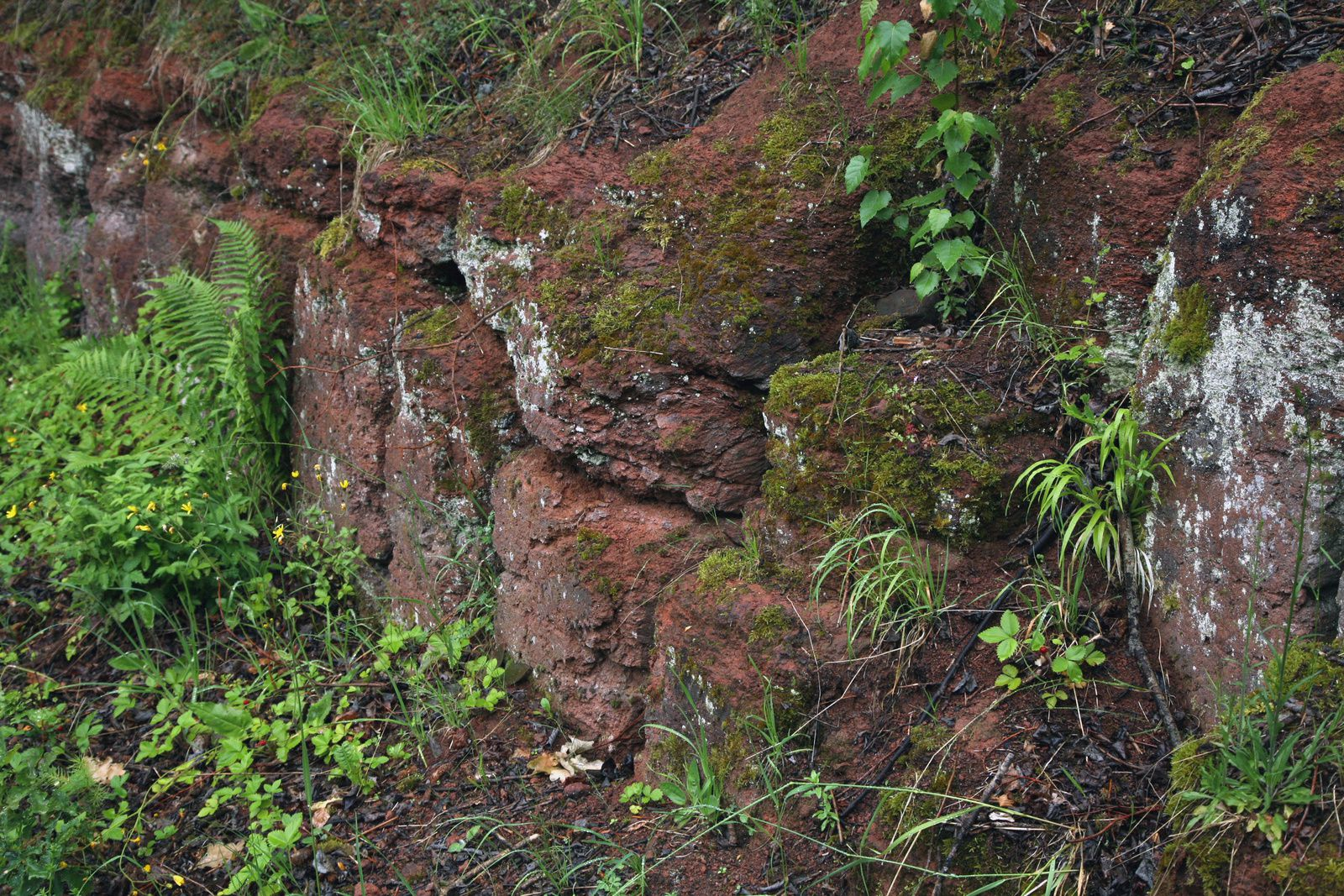 Vogelsberg - the red tuff of Michelnau - photo © Bernard Duyck 05.2014