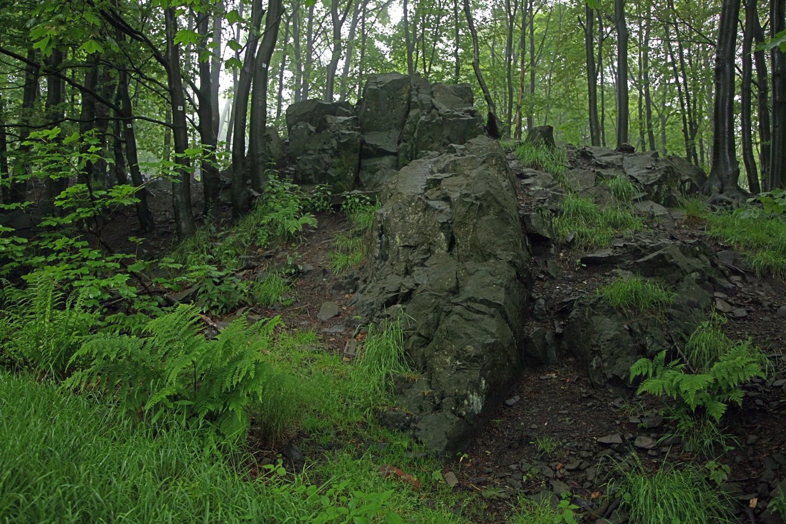 Vogelsberg - basanite outcrop - photo © Bernard Duyck 05.2014