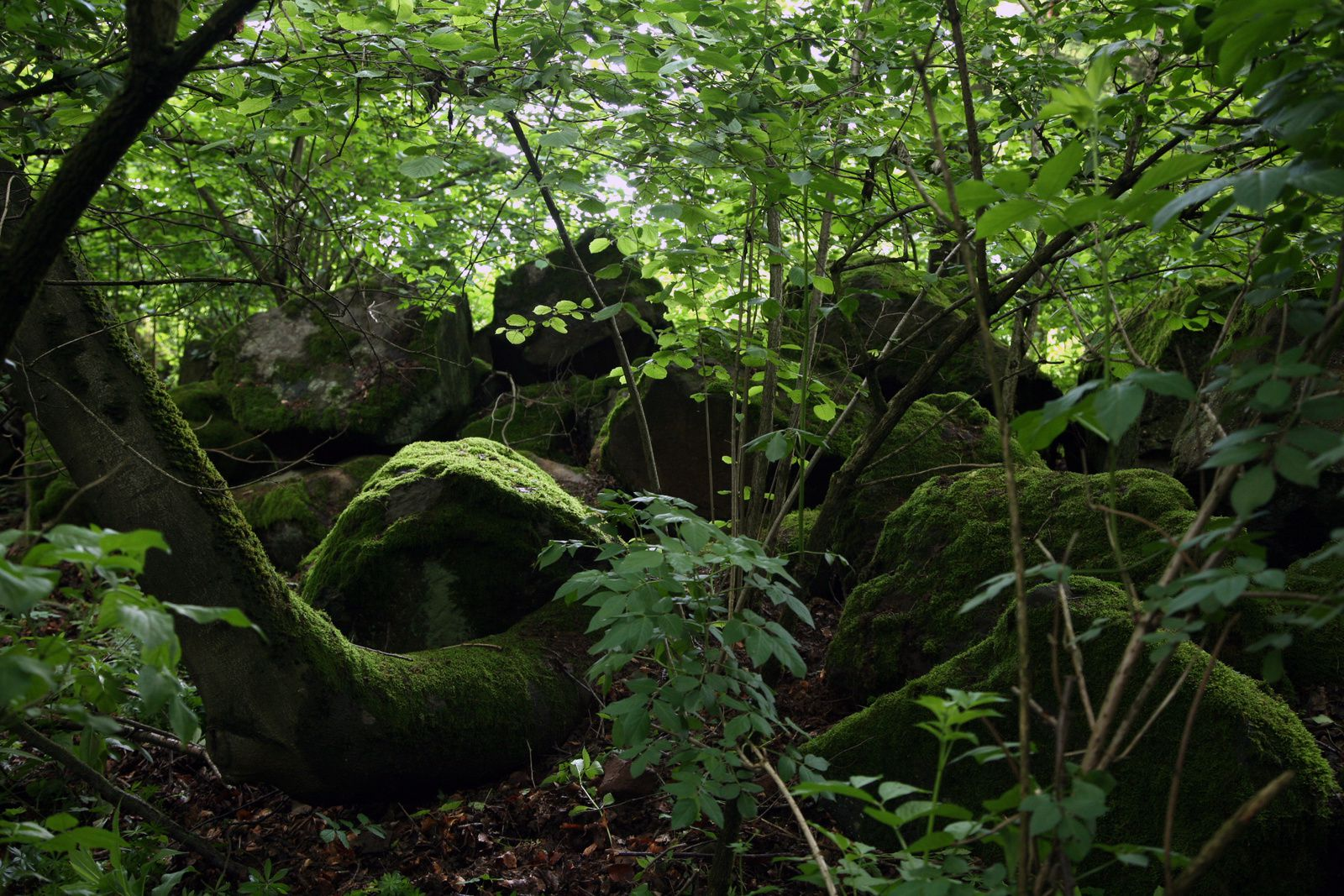 Vogelsberg - Mullstaa - the rubble - Photo © Bernard Duyck 05.2014