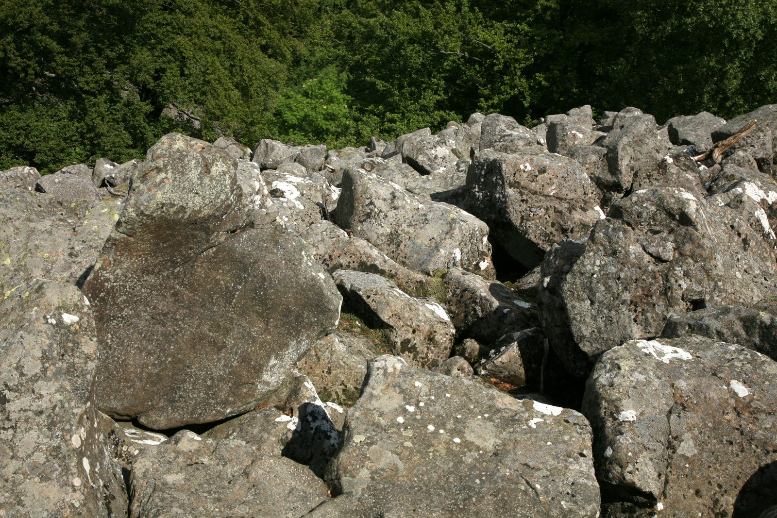 Schafstein - High of the scree - pieces of eroded basalt columns - photo © Bernard Duyck 05.2014