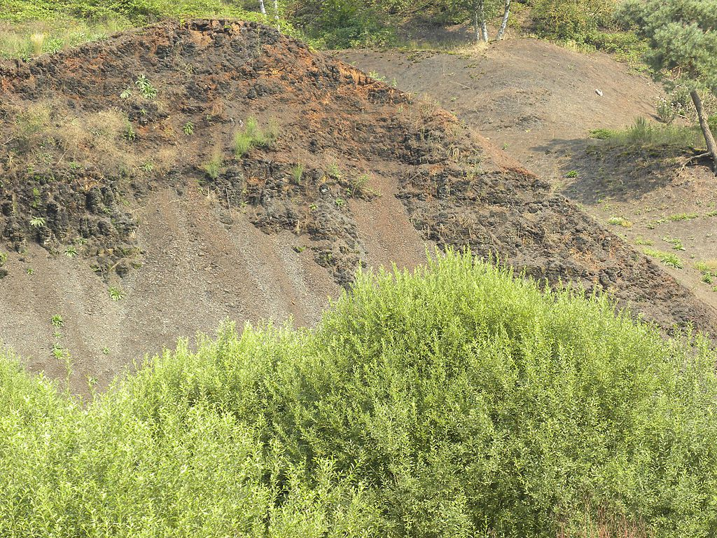 Messel pit - shale outcrop - Photo Wilson44691