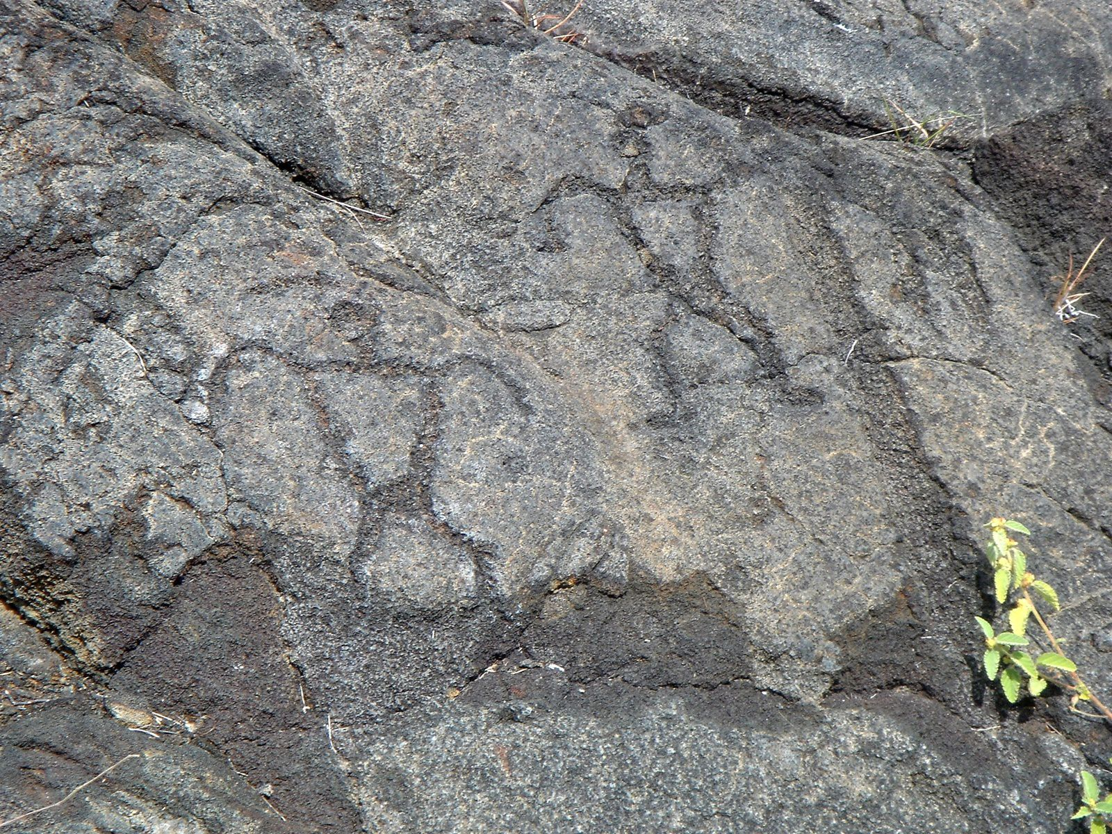 Pu'u Loa Petroglyphs, anthropomorphic figures - photo Staecker