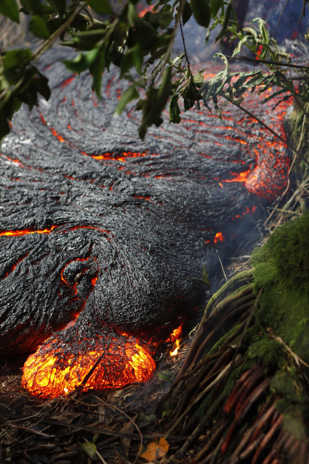 """Hawaii /  Pāhoa - un doigt de lave suinte du bord nord de la """"coulée du 27 juin"""" en zone forestière - photo HVO-USGS le 01.11.2014"""