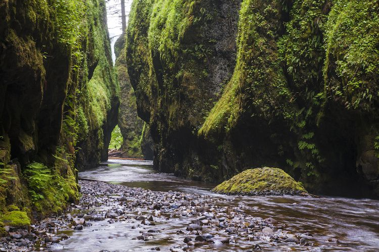 Columbia river gorge / Oneonta gorge - photo Roadtripper