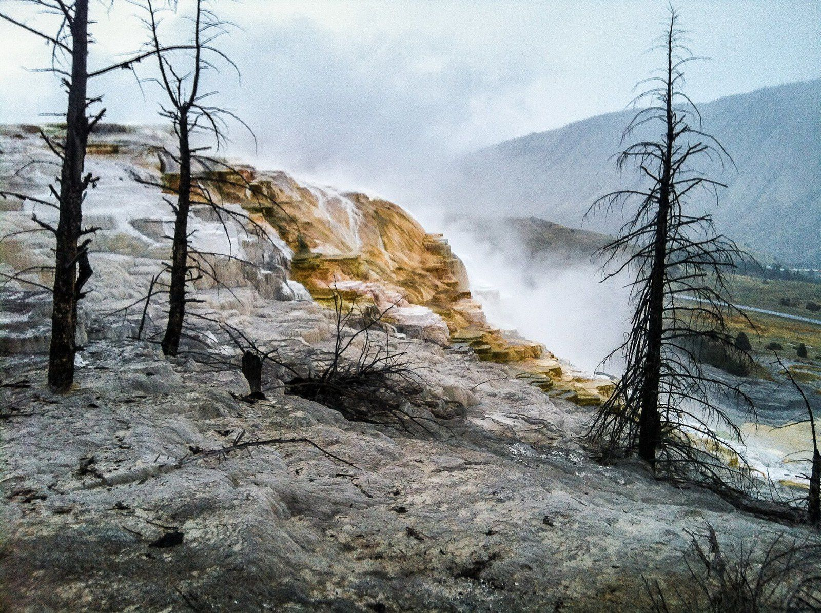 To Canary springs, thermophilic remain colorful - photo Yellowstone National Park in 2014