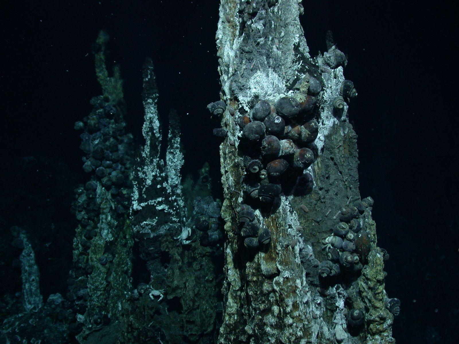 Mollusques et crabe vivant sur des évents hydrothermaux - photo ns.umich.edu