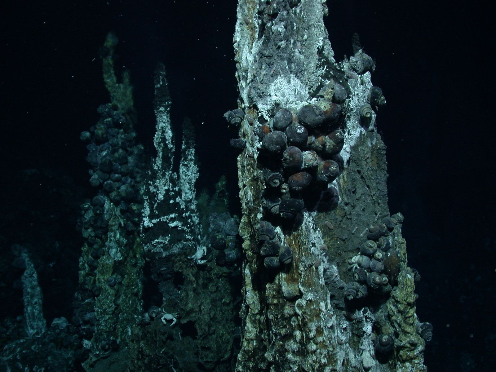 Molluscs and crabs living on hydrothermal vents - photo ns.umich.edu