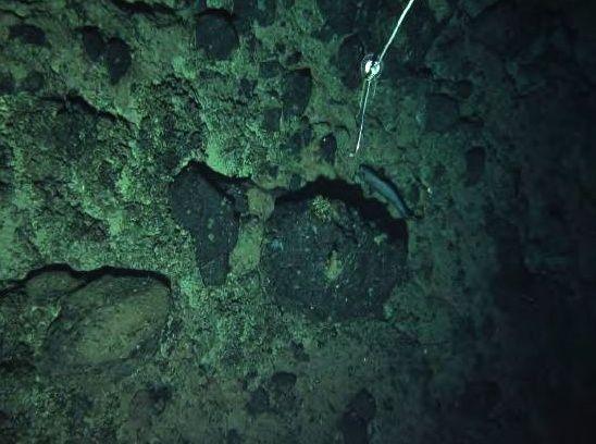 Tropic seamount : croûtes de Fe-Mn sur un substrat rocheux, photo prise à une profondeur de 1.300 mètres - doc. Informe Científico-Técnico de la Campaña Oceanográfica DRAGO 0511 – Vasquez & al.
