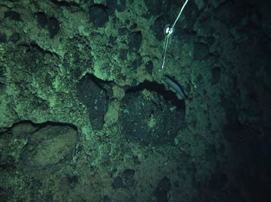 Tropic seamount : Fe-Mn crusts on bedrock, photo taken at a depth of 1,300 meters - Doc. Informs Científico-Técnico of Campaña oceanográfica DRAGO 0511 - Vasquez et al.