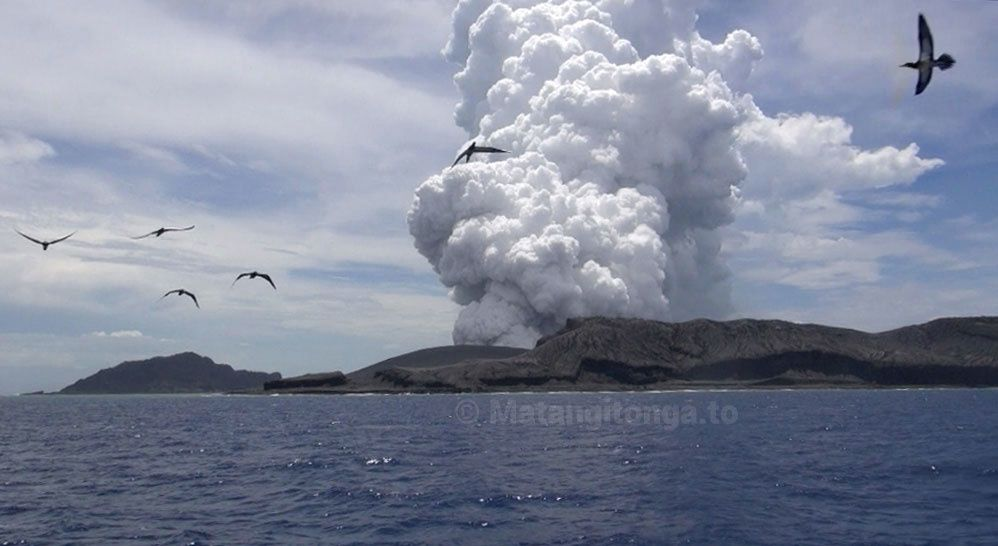 Hunga Ha'apai - Frigates birds advantage of thermal generated by the eruption - photo Matangi Tonga on line
