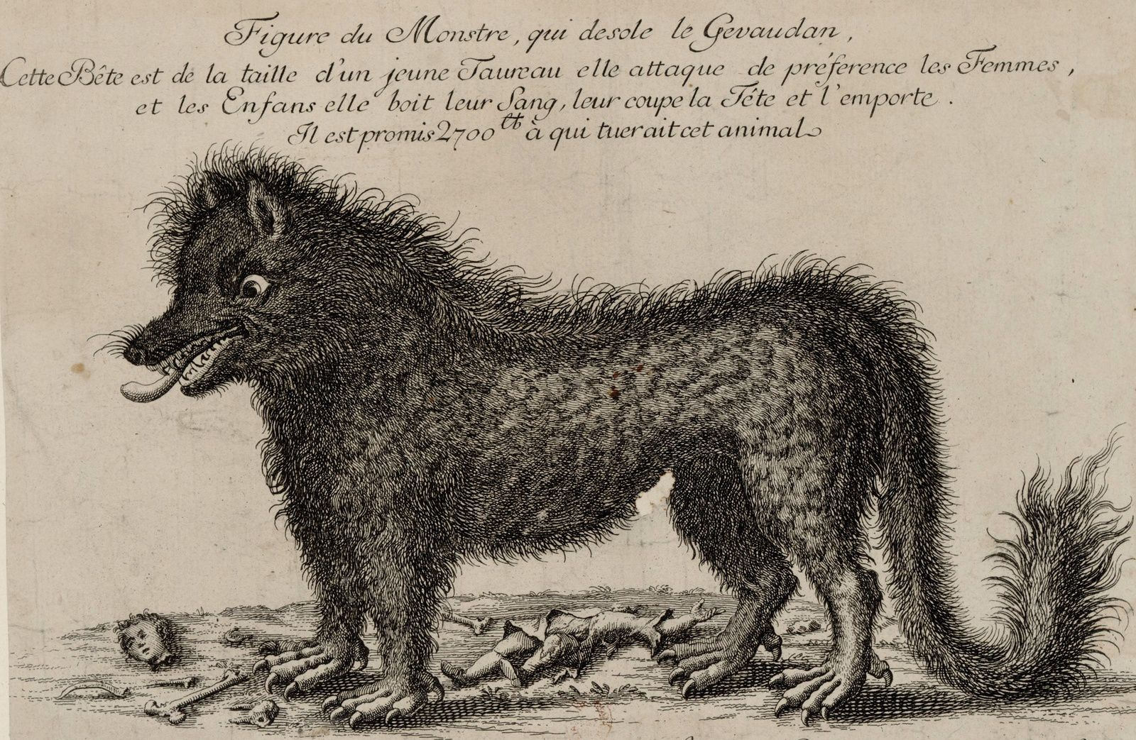 """Figure of the Monster that saddens Gevaudan"" engraving on copper 1764/1765 (Wikipedia / gallica)"