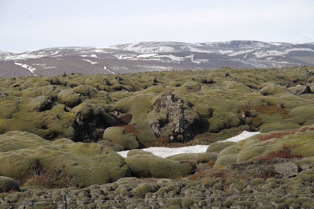 The Alftavershraun : the lava field of the crack of Eldgjá - photo © Jean-Michel Mestdagh