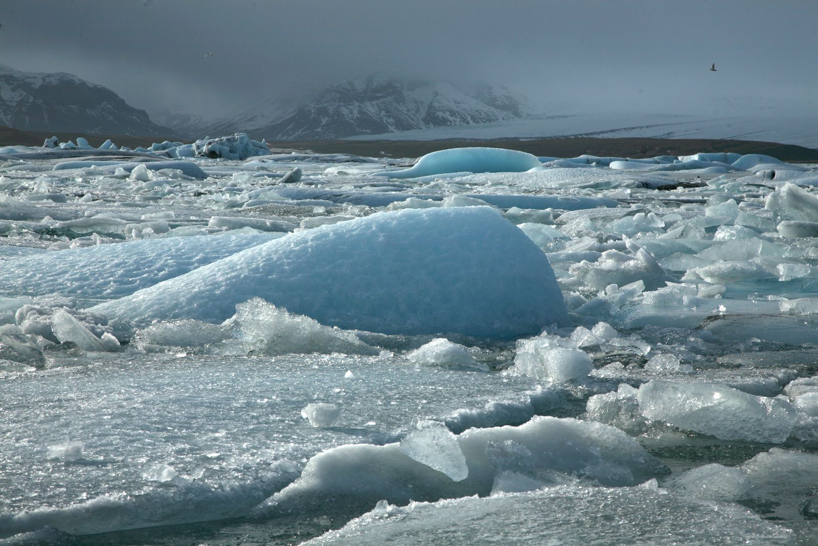 Jökulsárlón and his blue ice - photo © 2015 Bernard Duyck