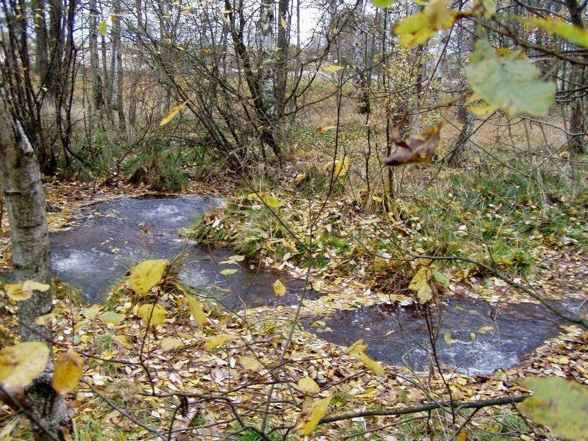 """La région de Frantiskovy Lazne (Bohême) proche de Novy Kostel, présente des zones à mofettes actives, dont une appelée Bublák (""""le gouglouteur"""")."""
