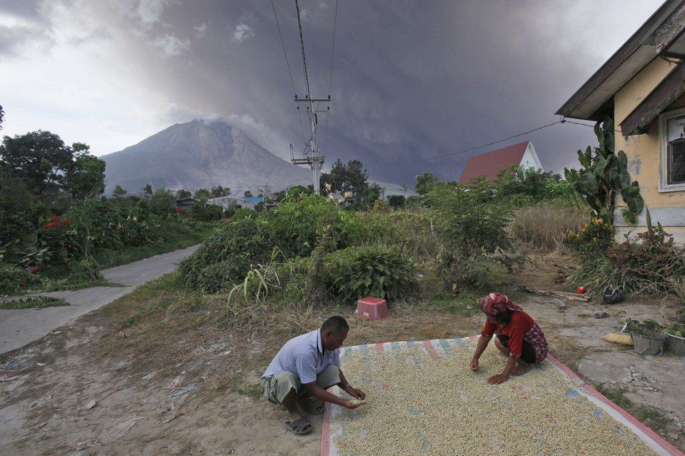 Difficile de faire sécher le café dans de telles conditions  - photo Binsar Bakkara / Associated Press 06.2015
