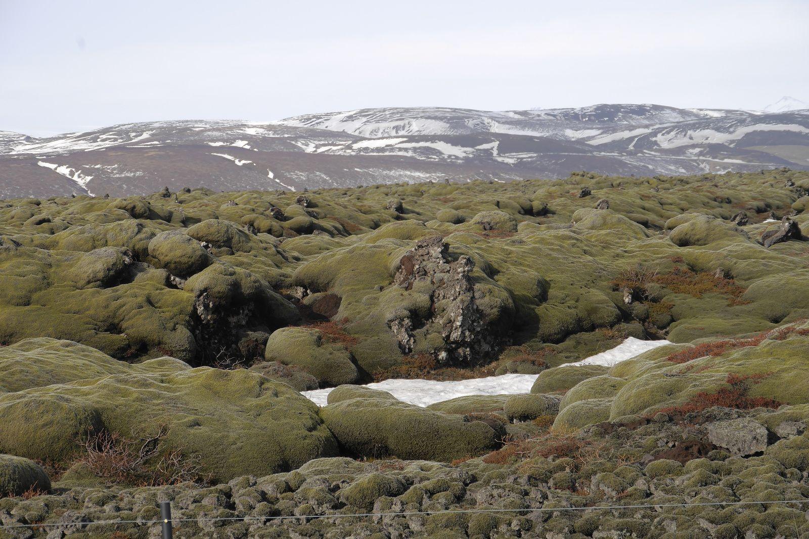 Islande - les champs de lave laissés par les éruptions de l'Eldgjá, aujourd'hui recouvert de mousses - photo JM.Mestdagh