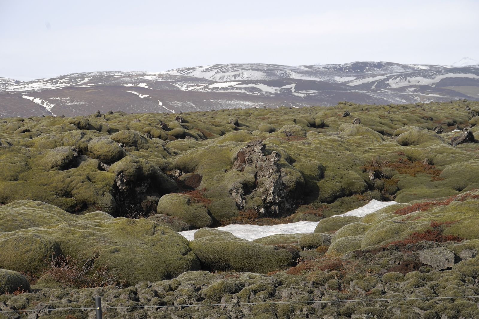 Iceland - lava fields left by the eruptions of Eldgjá, now covered with moss - photo JM.Mestdagh