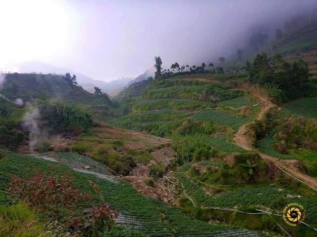 Dieng Plateau - crops in terraces - Photo © 2015 Jean-Michel Mestdagh